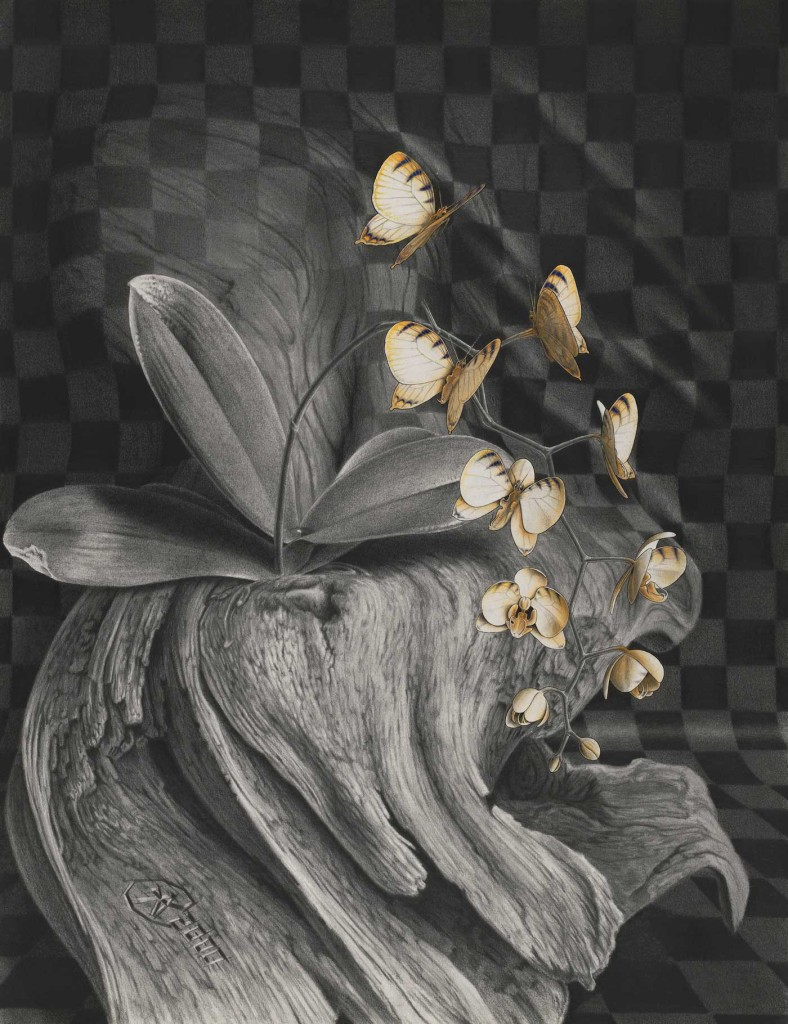 pencildrawing butterfly orchid freedom